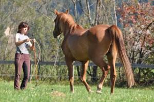 Lerne die Sprache der Pferde