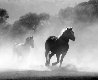 Pferde in ihrer Natürlichkeit
