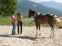 Unterricht mit dem Pferd