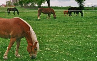 Das Pferdehöfle