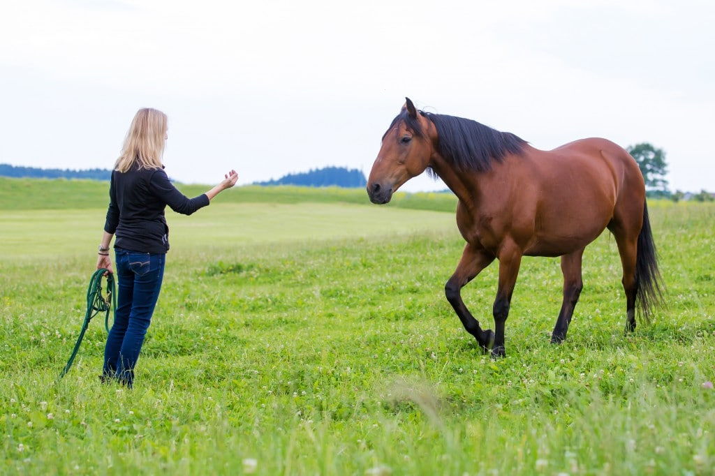 Paolo hat sich zu einem menschenbezogenen Pferde entwickelt