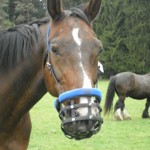 Easygrazer Pferd Sabine G